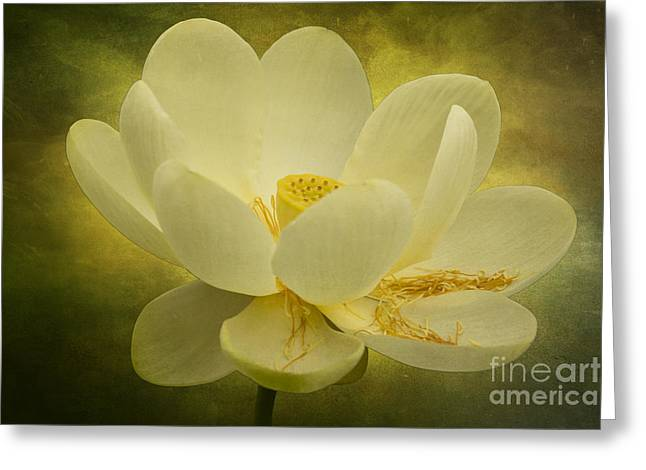 Greeting Card featuring the photograph Lotus by Vicki DeVico