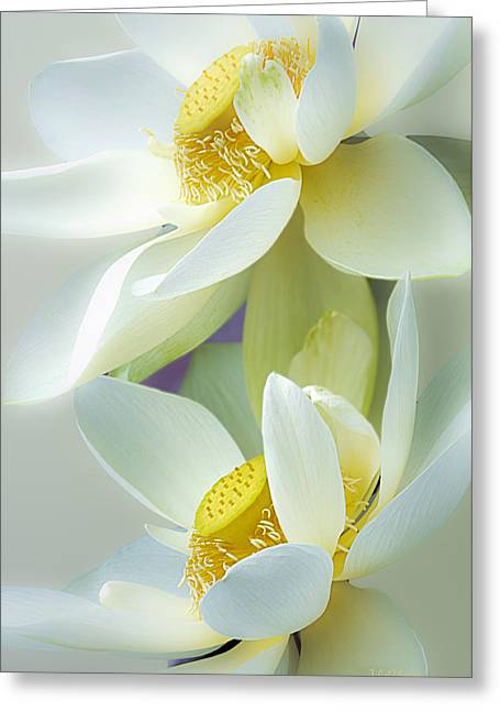 Lotuses In Bloom Greeting Card by Julie Palencia