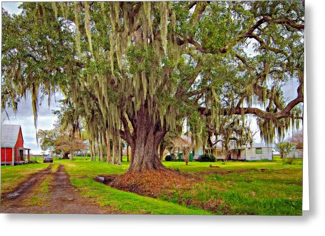 Louisiana Country Oil Greeting Card by Steve Harrington