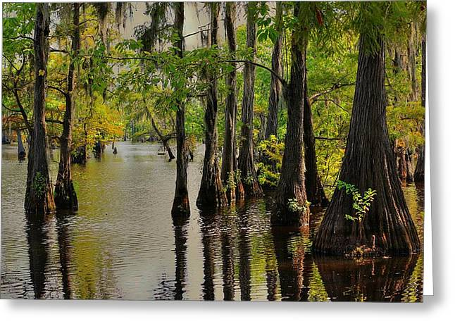 Louisiana Cypress Swamp Greeting Card