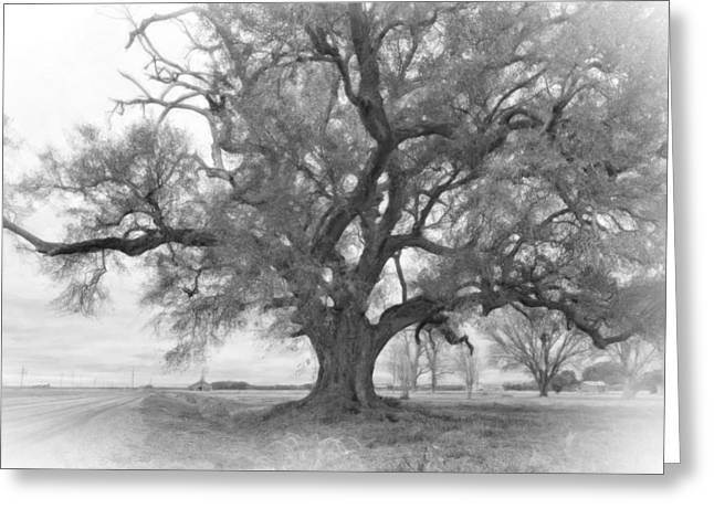Louisiana Dreamin' Monochrome Greeting Card by Steve Harrington