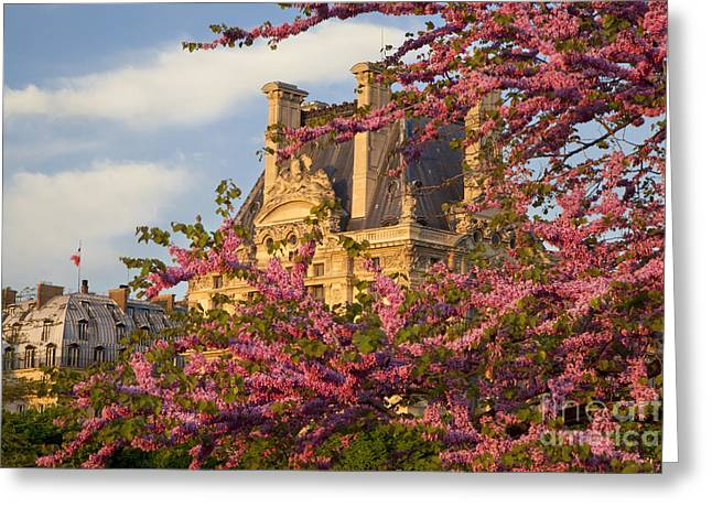 Louvre Blossoms Greeting Card by Brian Jannsen