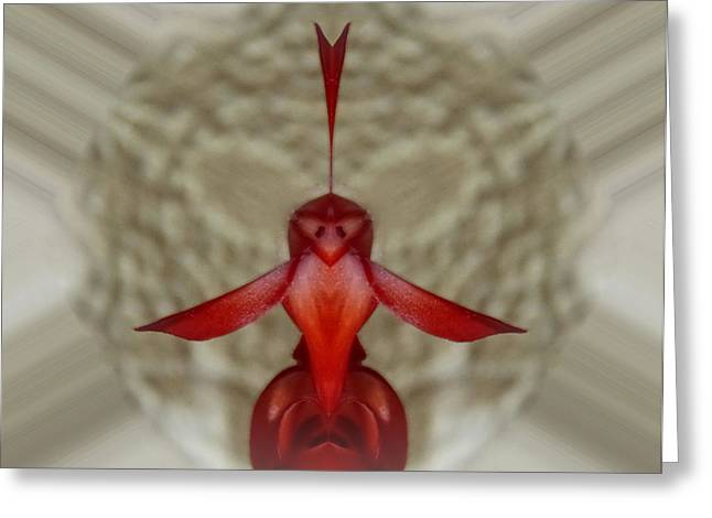 Love Bird Greeting Card by Pete Trenholm