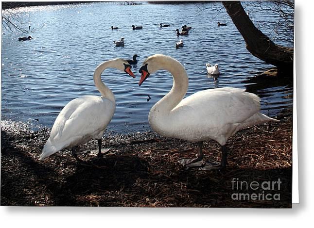 Love Bird Swans Greeting Card