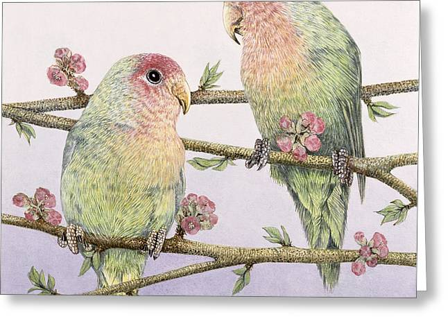 Love Birds Greeting Card by Pat Scott