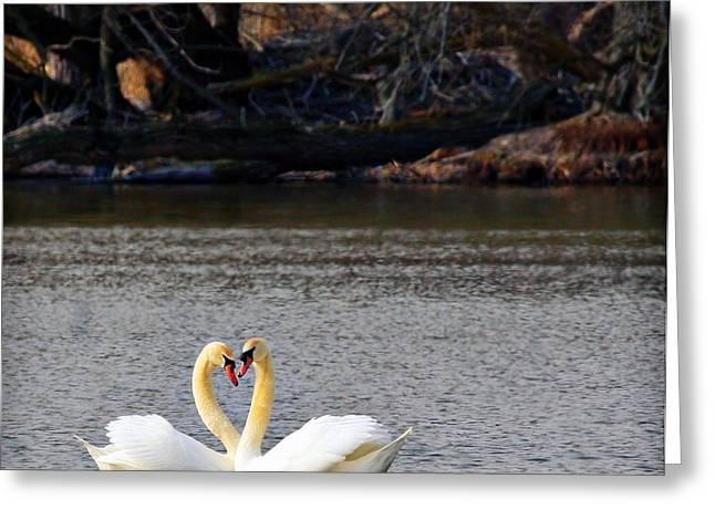 Love Birds Greeting Card by Richard Engelbrecht