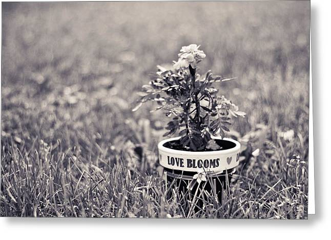 Greeting Card featuring the photograph Love Blooms by Sara Frank
