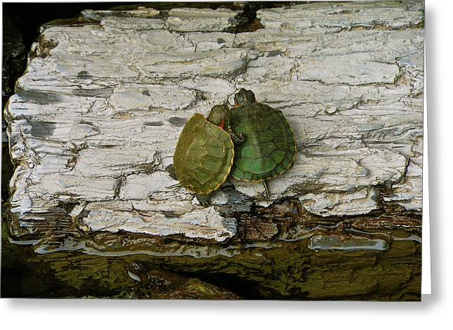 Love In A Shell Greeting Card