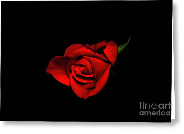 Love Is A Rose V Greeting Card by Al Bourassa