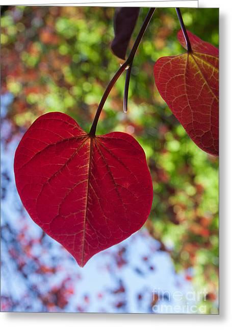 Love Is Everywhere Greeting Card