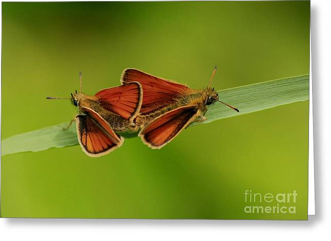 Love Is In The Air Greeting Card by Inspired Nature Photography Fine Art Photography