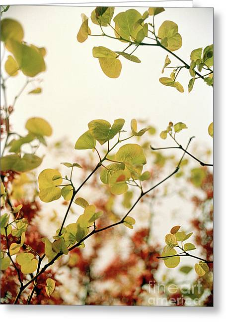 Greeting Card featuring the photograph Love Leaf by Rebecca Harman