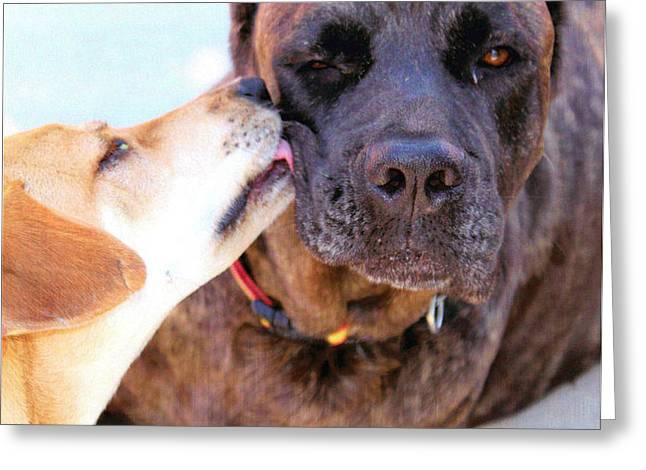Greeting Card featuring the photograph Love Licks by Janice Rae Pariza