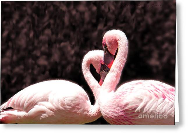 Greeting Card featuring the photograph Love Of The Flamingos by Gena Weiser