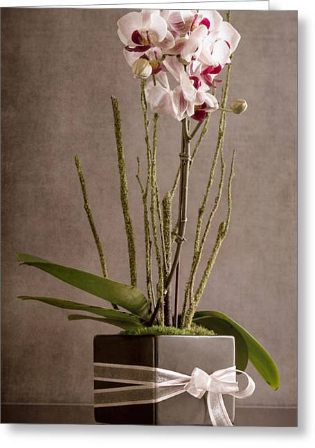 Love Orchid Greeting Card
