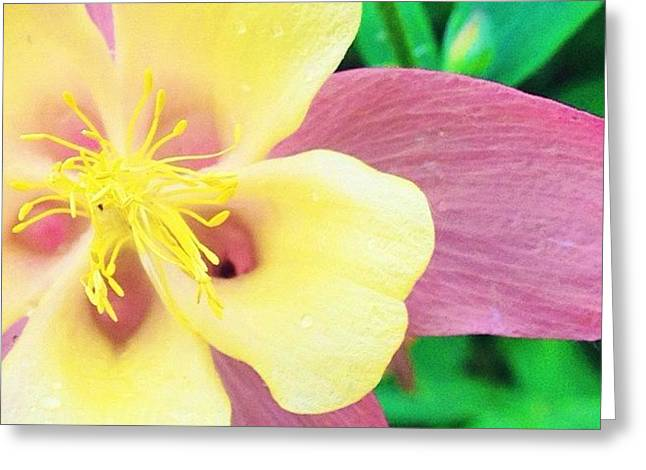 Lovely Columbine Flower Greeting Card