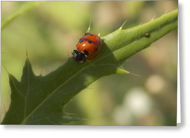 Lovely Lady Bug Greeting Card by Shelly Gunderson