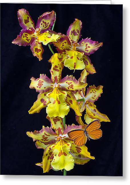 Lovely Orchid With Butterfly Greeting Card by Garry Gay