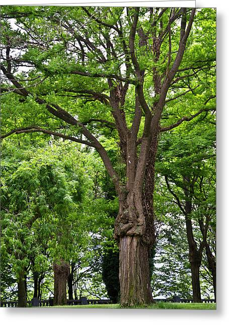 Lovely Park Featuring Giant Trees Greeting Card by Jan and Stoney Edwards