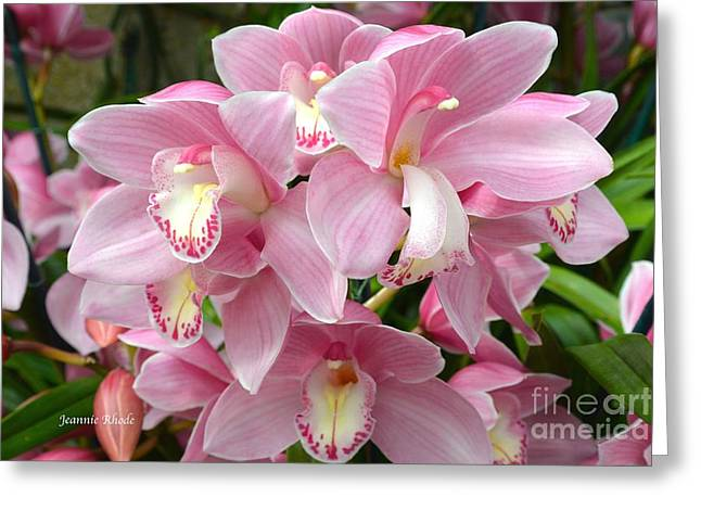 Greeting Card featuring the photograph Cymbidium Pink Orchids by Jeannie Rhode