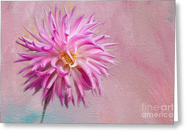 Lovely Pink Dahlia Greeting Card
