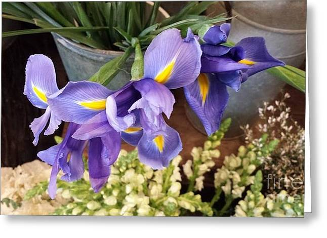 Lovely Purple Irises Greeting Card