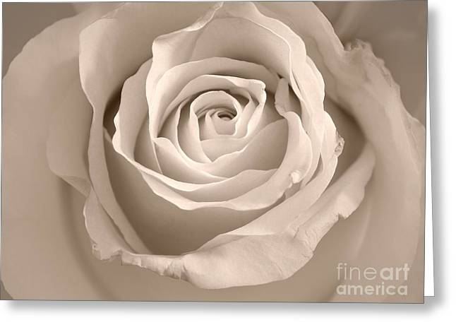 Lovely Rose Greeting Card by Lutz Baar
