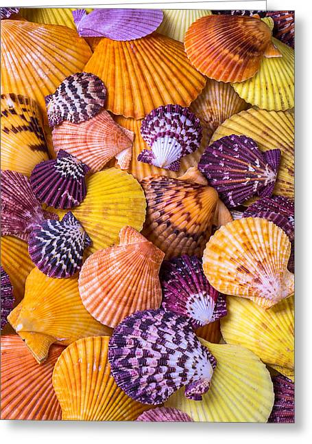 Lovely Sea Shells Greeting Card by Garry Gay