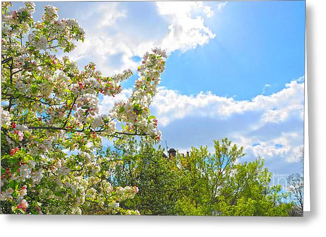Lovely Spring Blossoms Greeting Card