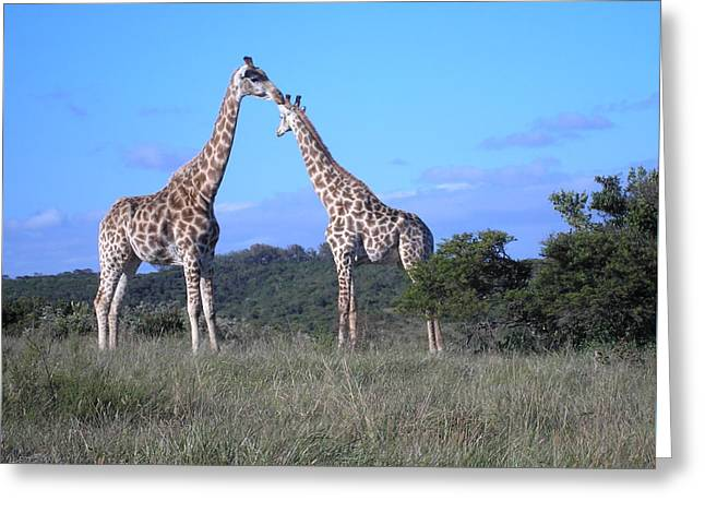 Lovers On Safari Greeting Card