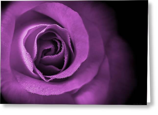 Love's Eternal Violet Rose Greeting Card