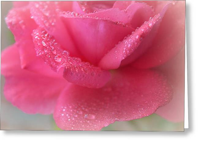 Love's Favourite Rose Greeting Card by The Art Of Marilyn Ridoutt-Greene
