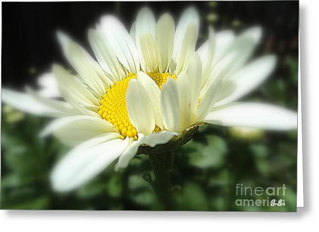Greeting Card featuring the photograph Loves Me by Geri Glavis
