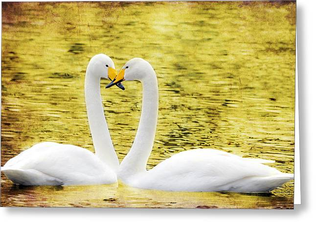 Loving Swans Greeting Card by Tommytechno Sweden