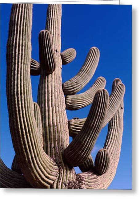 Low Angle View Of A Saguaro Cactus Greeting Card by Panoramic Images