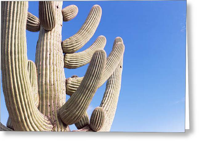 Low Angle View Of A Saguaro Greeting Card