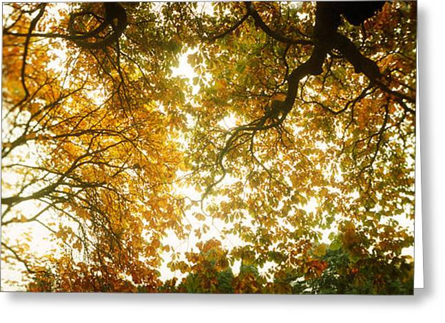 Low Angle View Of Autumn Trees Greeting Card by Panoramic Images
