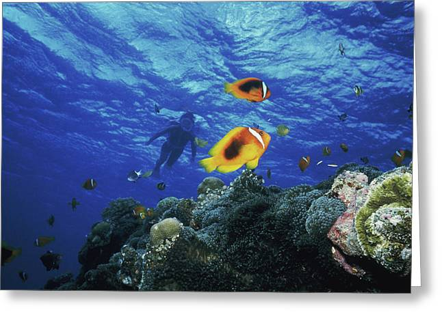 Low Angle View Of Fish Undersea Greeting Card