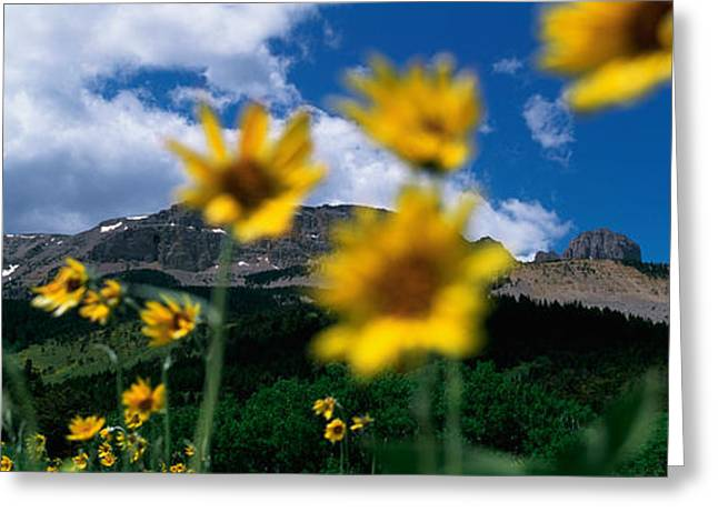 Low Angle View Of Mountains, Montana Greeting Card