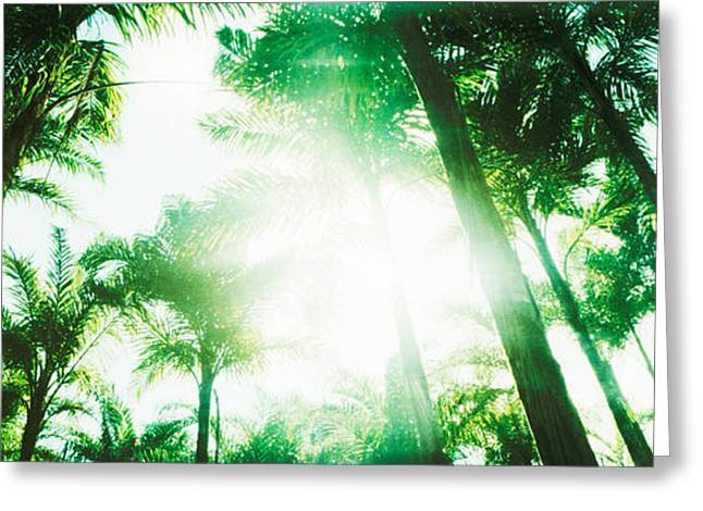 Low Angle View Of Palm Trees, Arenal Greeting Card by Panoramic Images