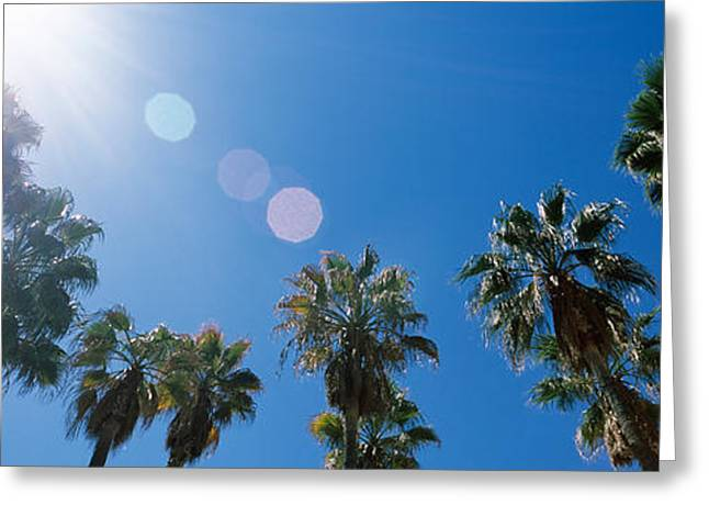 Low Angle View Of Palm Trees, Downtown Greeting Card