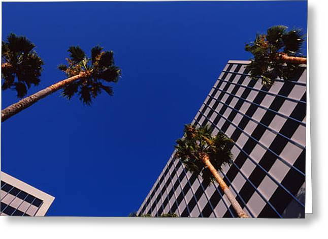 Low Angle View Of Palm Trees In Front Greeting Card