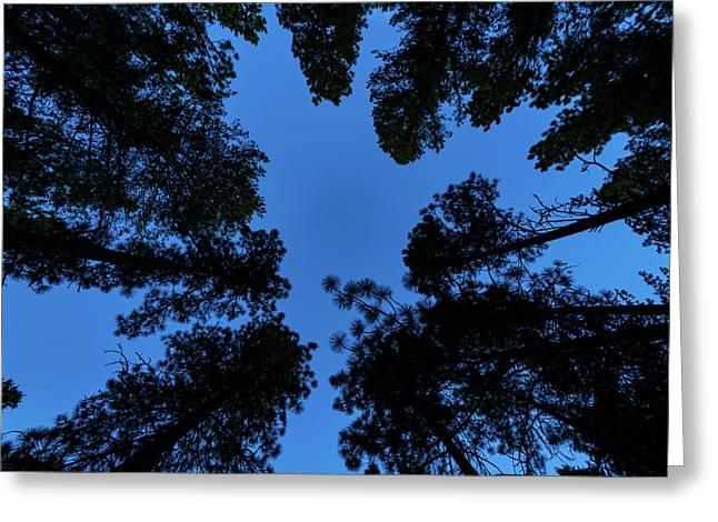 Low Angle View Of Ponderosa Pine Greeting Card