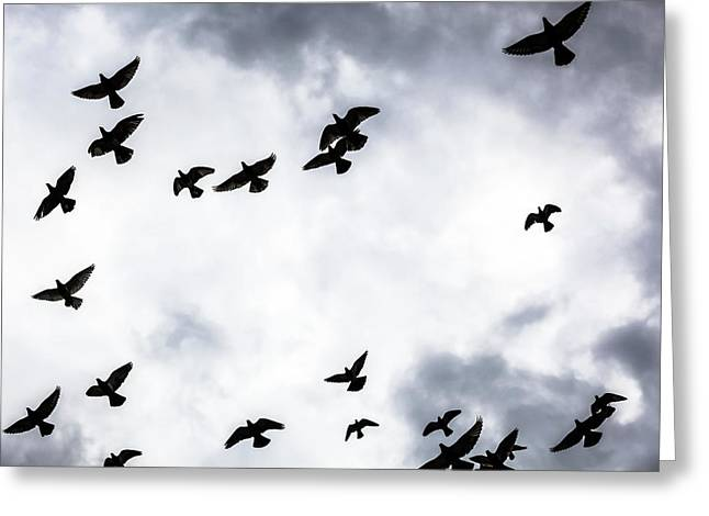 Low Angle View Of Silhouetted Flock Greeting Card by Reynold Mainse