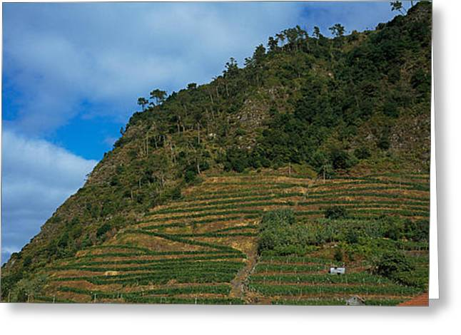 Low Angle View Of Terraced Fields Greeting Card