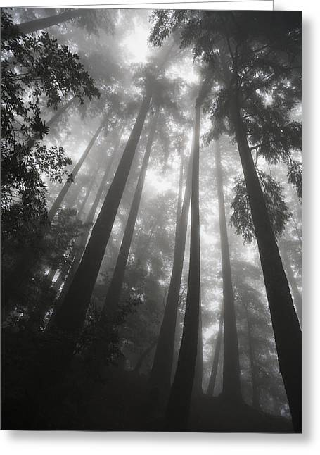 Low Angle View Of Tree Tops In The Fog Greeting Card by Paul Quayle
