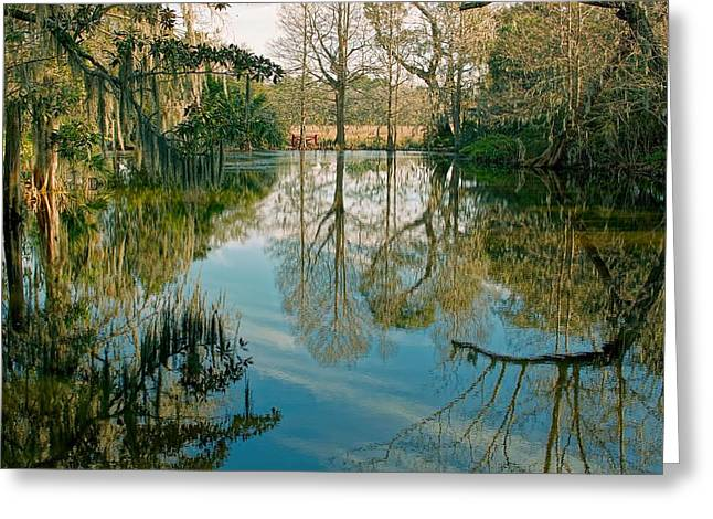 Low Country Swamp Greeting Card