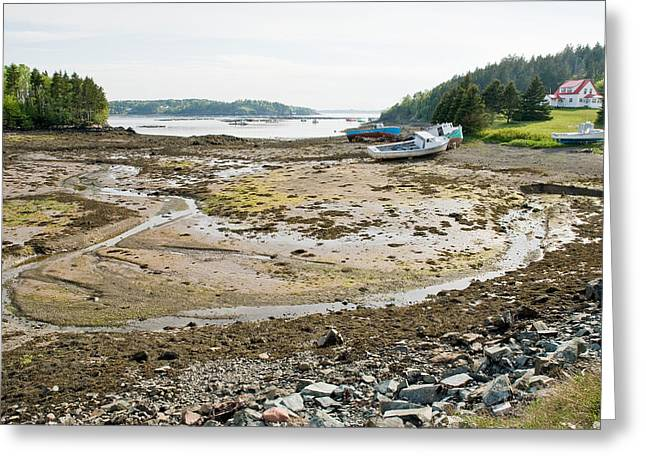 Low Tide Greeting Card by Andrew J. Martinez
