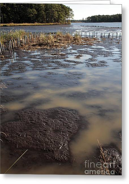 Low Tide At Blackwater Wildlife Refuge In Maryland Greeting Card