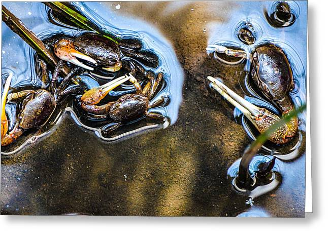 Low Tide Breakfast  Greeting Card